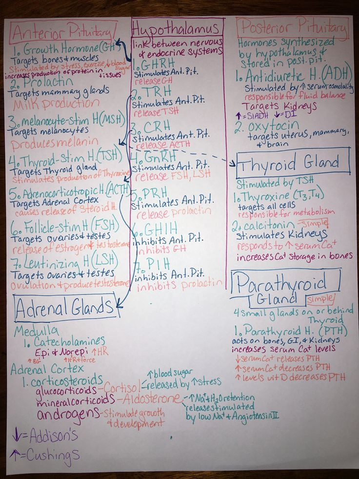 Endocrine hormone map. Nursing school!