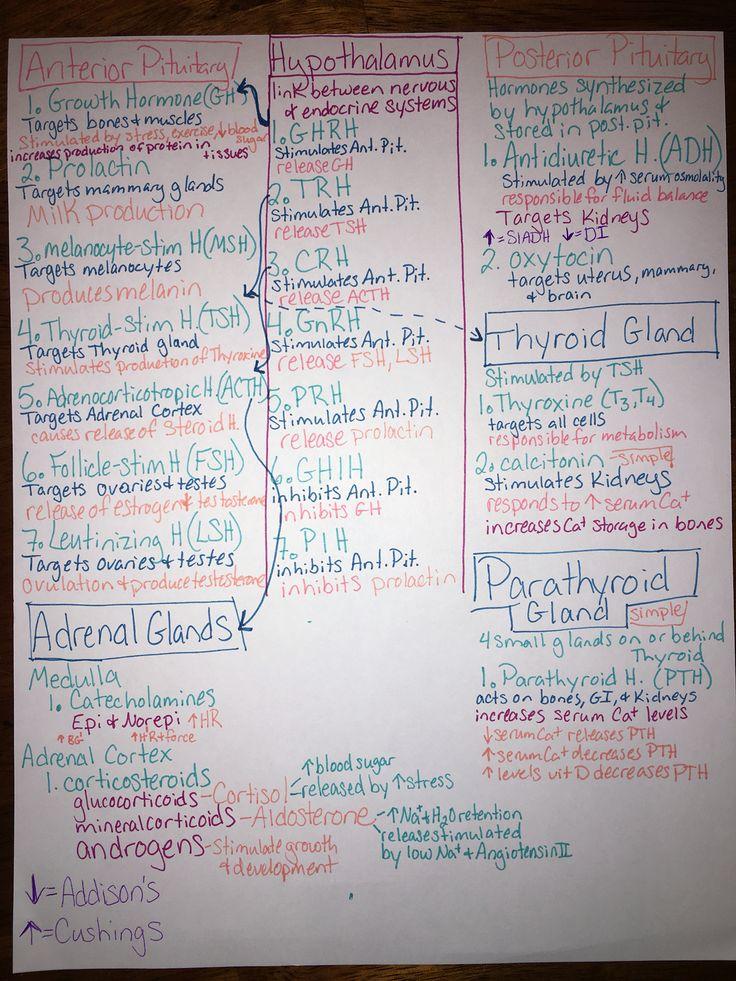 Endocrine hormone map. Nursing school!