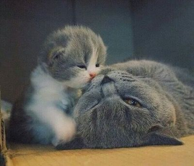 OMG this kitten and cat is sooo cute love it my favourite amazing love it beautiful.