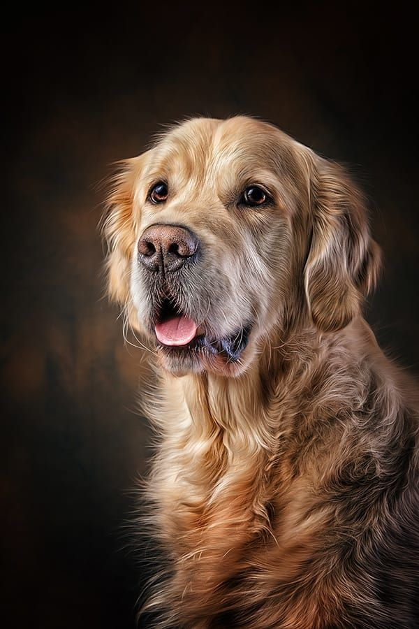 golden retriever by Danny Block on 500px