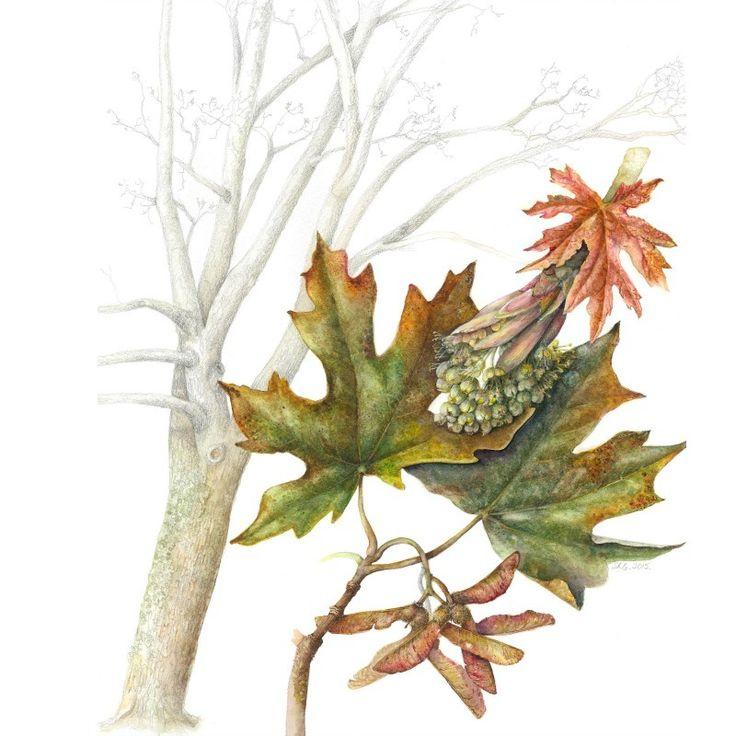 Bedgebury Pinetum Florilegium Society - Susan Conroy
