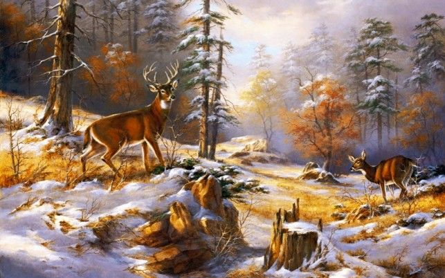 Wood Pretty Deer Early Winter wallpapers and stock photos