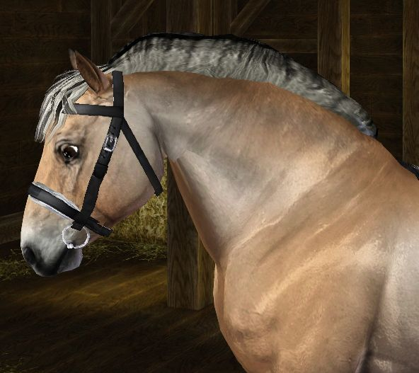 Fjord mane - by Sugars Legacy Stables