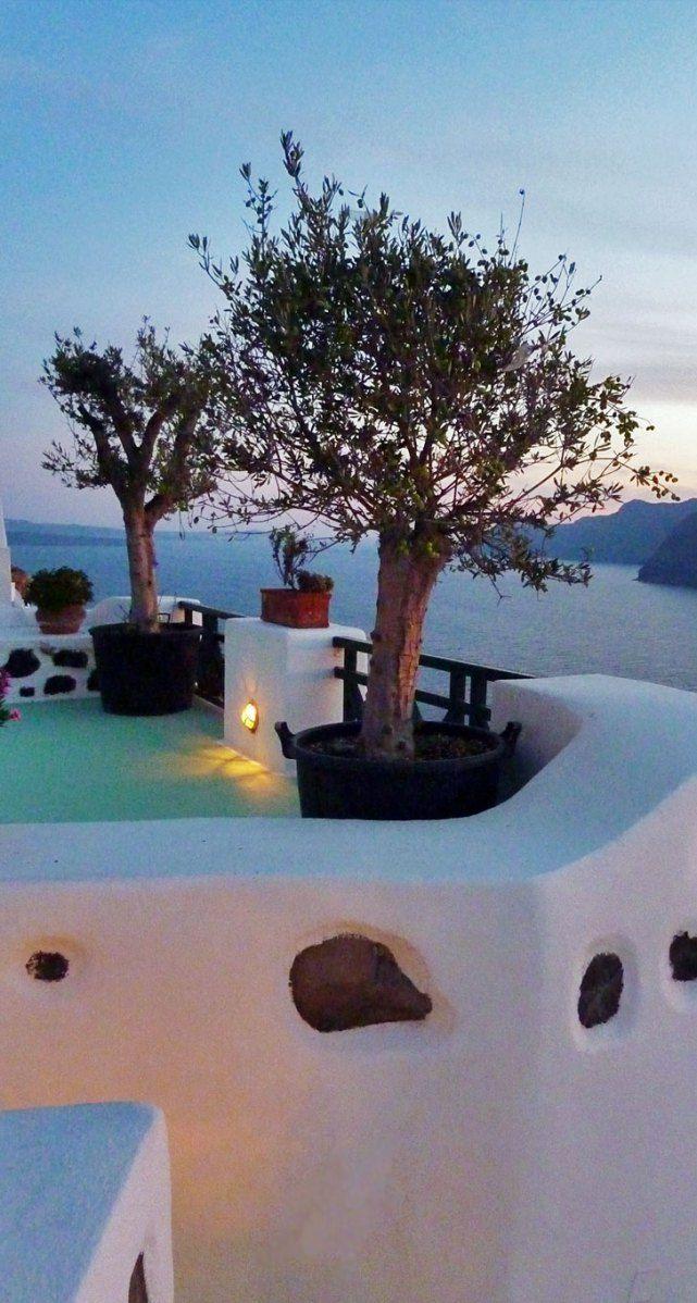 Olive Tree Sunset, Oia, Santorini Island, Greece