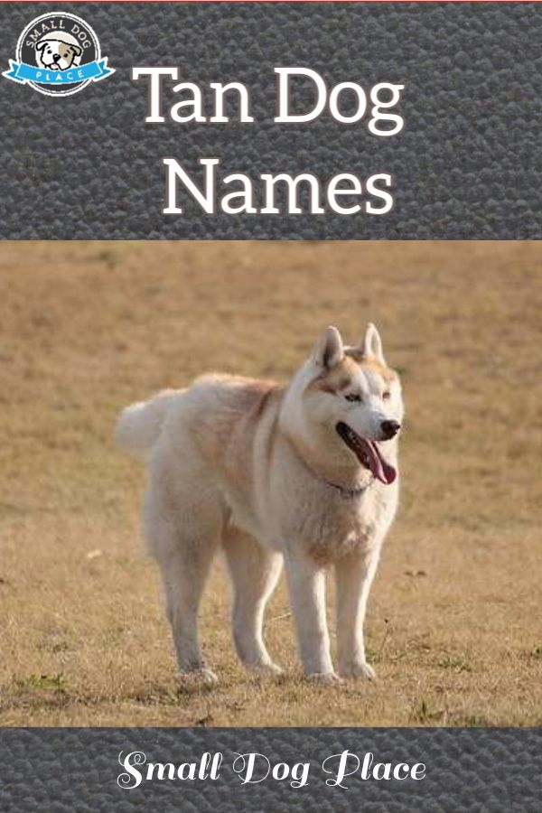 Tan Dog Names In 2020 Dog Names Best Dog Names Dogs