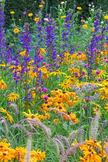 Garden Ideas, Border ideas, Summer border, Fall Border, Rudbeckia Hirta, Black…