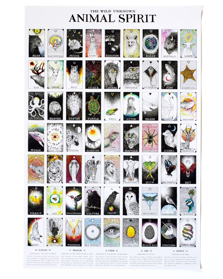 123 dream animal spirit cards animal spirit deck