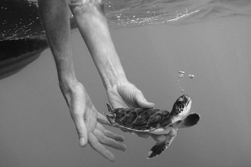 Off you go Awe, Surfs Up, The Ocean, My Heart, Adorable, Baby Turtles, Animal, Photography Turtles, Baby Sea Turtles