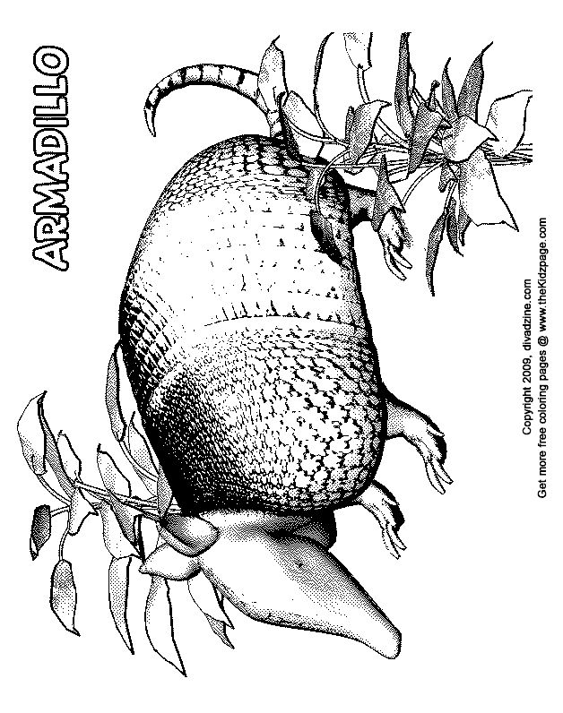 armadillo free coloring pages for kids printable colouring sheets - Armadillo Coloring Pages Print