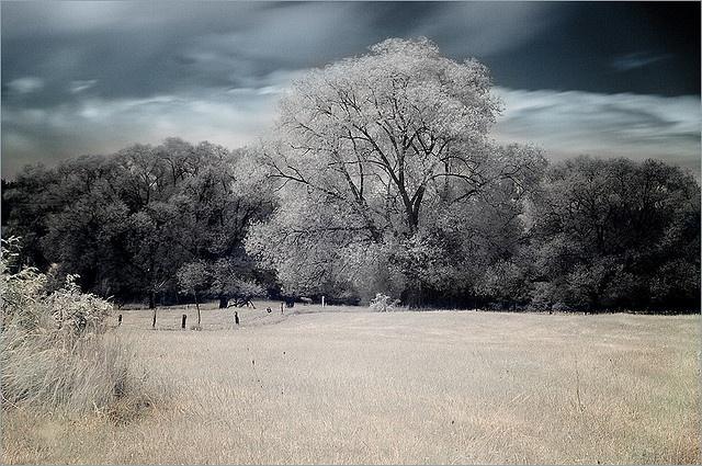 I-R filter, Mazury by Martoola, via Flickr