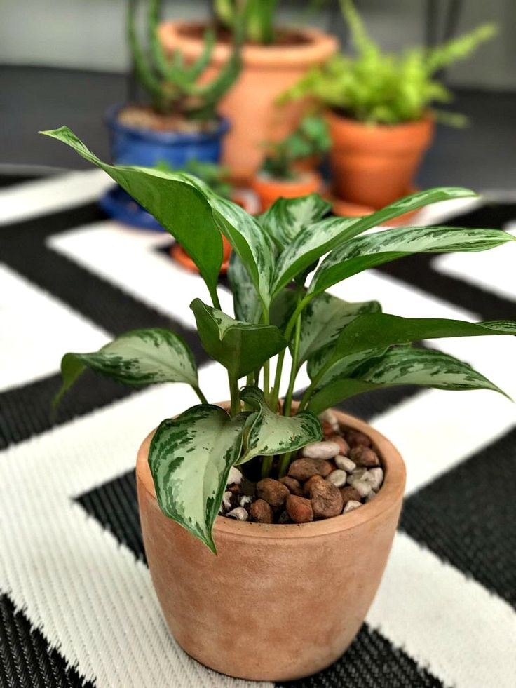Durable Plants For The Garden: 31 Best Plants Images On Pinterest