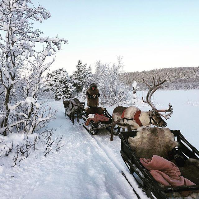 Winter-reindeer-wonderland along altaelva with @samisiidaalta on our #altaadventure18. . . . with @danishadventurer and @talesfromabroad. Learn more on winterfun in Alta from @visitalta and @northadventurealta #mittnorge #mittnordnorge #ig_nordnorge #finnsta #landscapesofnorway #magnific_moments #norskenaturbilder #utpåtur #reinsdyr #naturephotography #politiken_rejser #sami  @cnbctravel @lonelyplanet @northernnorway @visitnorway