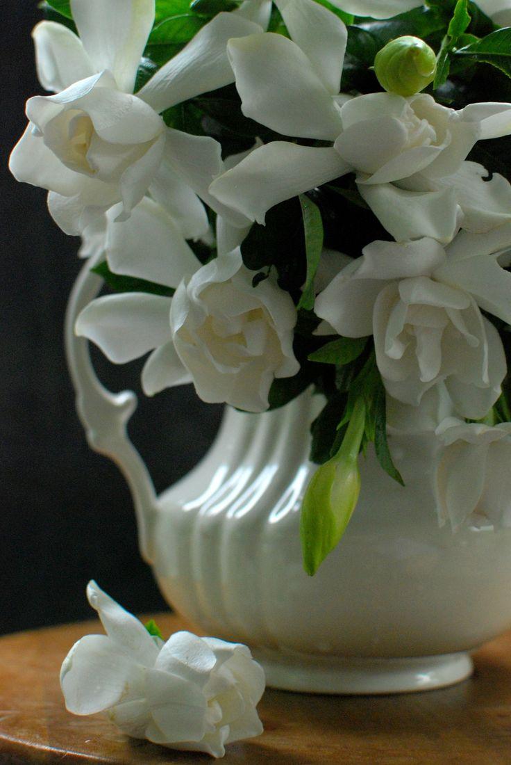 Southern Charm - White Gardenias & Magnolias!