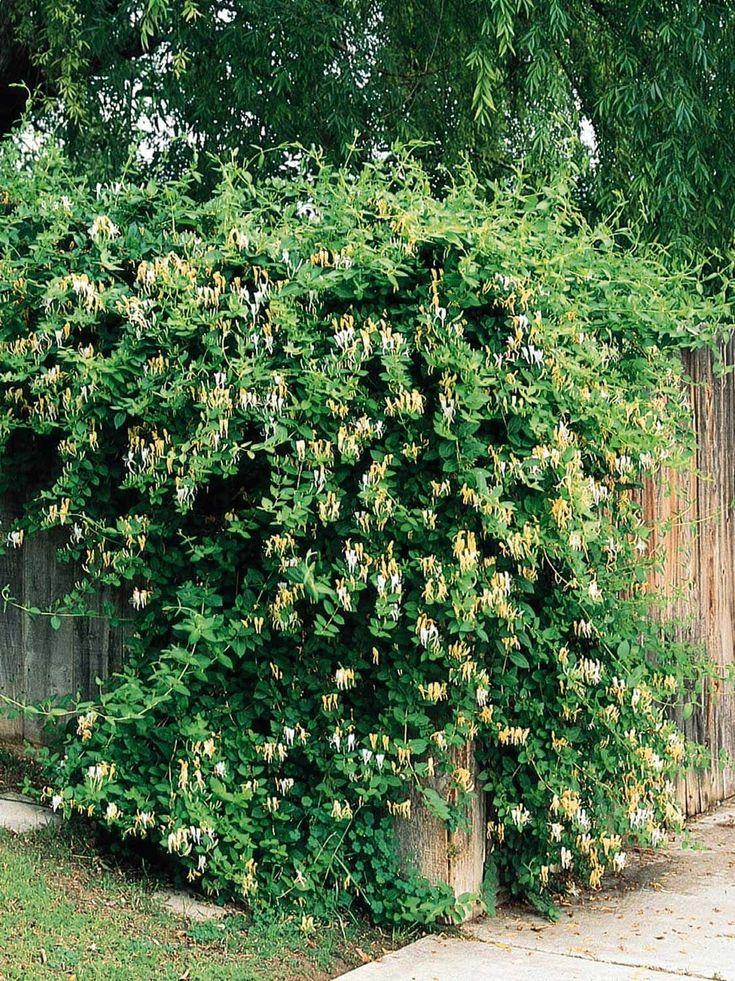 asian garden monrovia ca