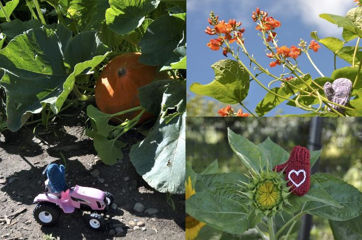 The colder nights of fall are coming, and the mittens are starting to harvest the garden. #garden #harvest15