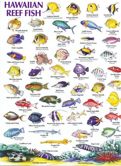 http://www.tresselt.de/schnorcheln-in-hawaii.htm