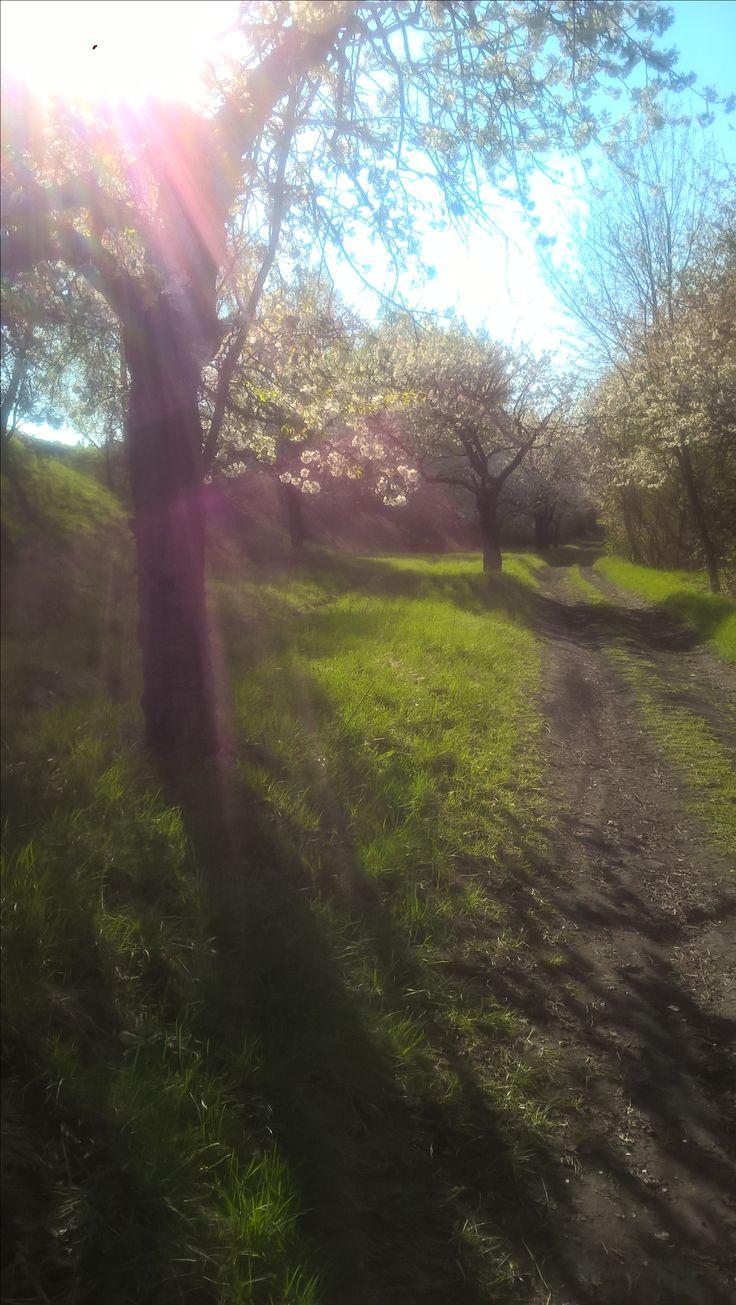 jaro na Záhoří