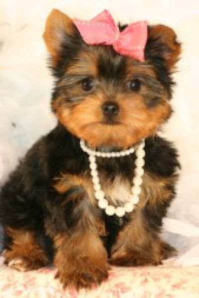 I will most likely never have a dog.....BUT if I did...this is a must :)