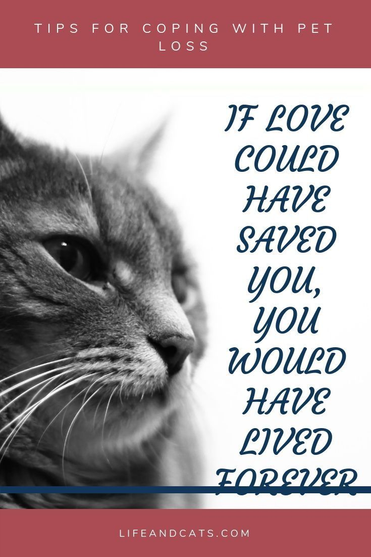 Strategies To Cope With The Grief Of Pet Loss Self Care Memorials To Your Pet Help Your Friend Cope With Pet Loss H Pet Loss Cat Pet Grief Pet Quotes Cat