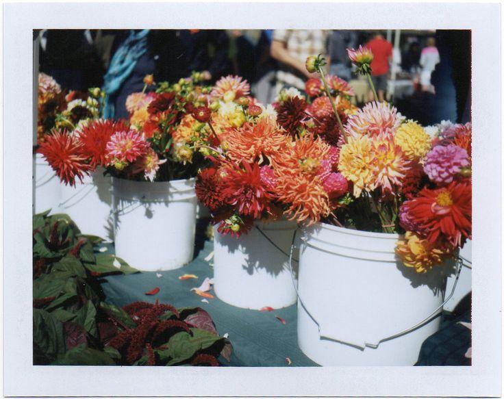 : Dig Flowers, Forts Mason, Dahlias Fortmason, Flowers Dahlias, Flowers Bunch, Flowers Power, Posts, Fortmason Farmersmarket, Farmersmarket Polaroid