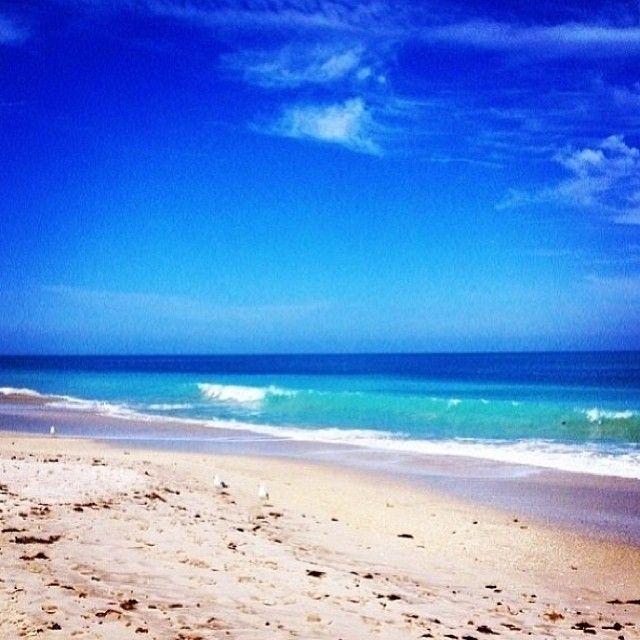 Dog Friendly Beaches Near Vero Beach Florida