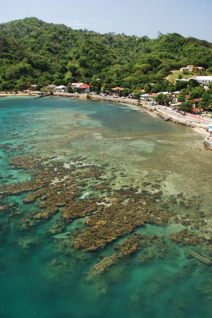 Elegant Roatan Island Reef | By Quantum Peep