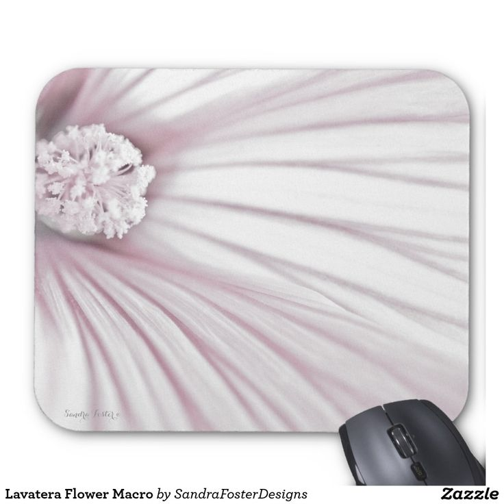 Lavatera Flower Macro Mouse Pad