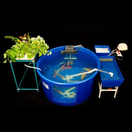 The Mini Fish Farm | Fish farming, Aquaponics, Aquaponics ...