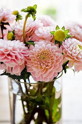 dahlias - though I do prefer blood red to pink...it's the type that counts.