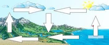 """Képtalálat a következőre: """"vizek élővilága feladatlap"""""""
