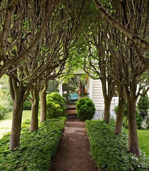 Landscaping With Pear Trees : All?e of growing bradford pear trees garden landscaping
