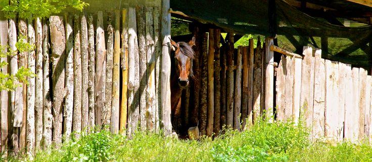 """Cavallo razza """"Cimei"""" ;-) di Flavio Bruni"""