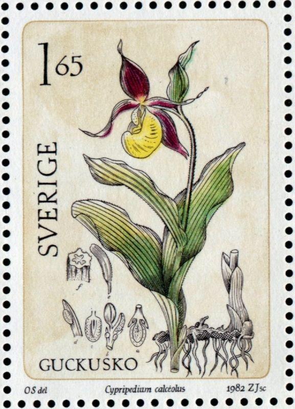 https://i.pinimg.com/736x/f5/04/01/f5040117f0959b9489f1a04320cc1c53--paper-animals-wild-orchid.jpg