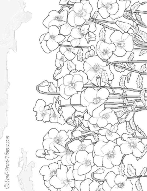 pansy coloring page lgjpg 612792