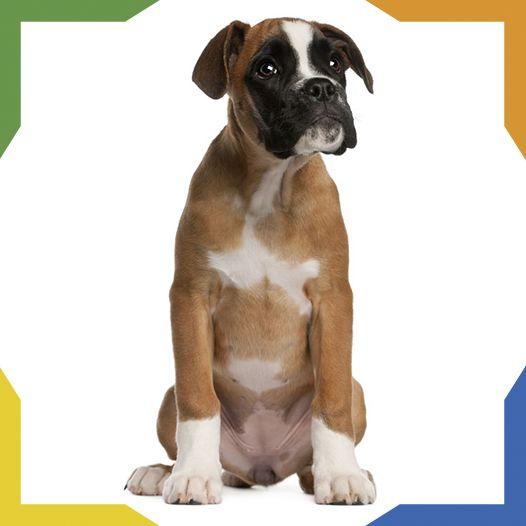 Mejores 73 im genes de razas de perros en pinterest - Es malo banar mucho a los perros ...