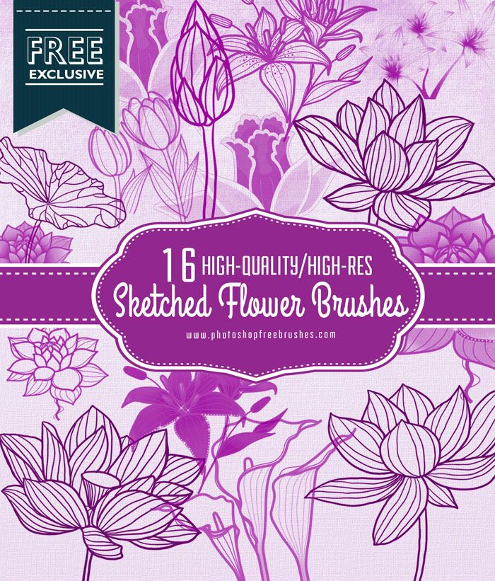 16 Outlined Flowers Brushes Lotus Tulips Lilies Free