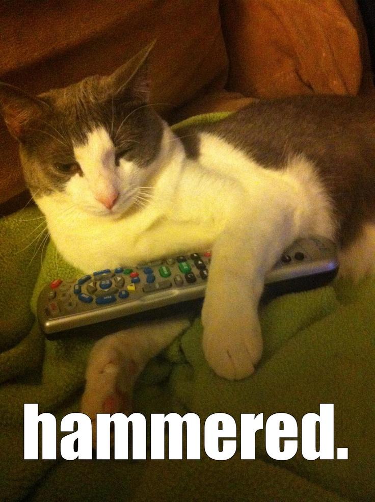 cat computer games
