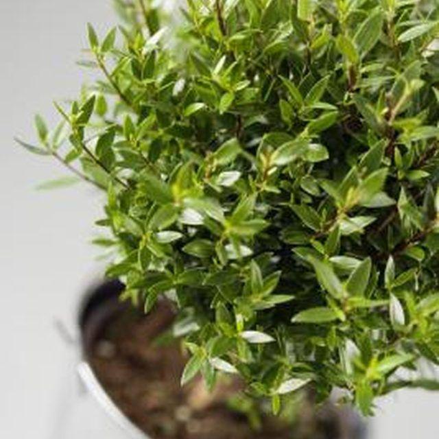 f505a34bff948b55f0fff4e21adb6e95--potted-plants-indoor-plants Tiny Flies Around Houseplants on