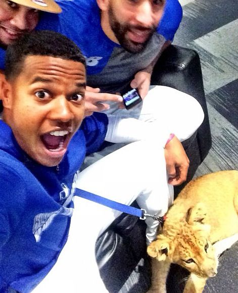 Blue jays && Animals: Marcus Stroman, Jose Bautista and Melky Cabrera   (From Marcus' twitter)