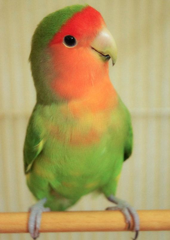 Tweety Fine Art Photography Bird Green by SweetMomentsCaptured, $16.00