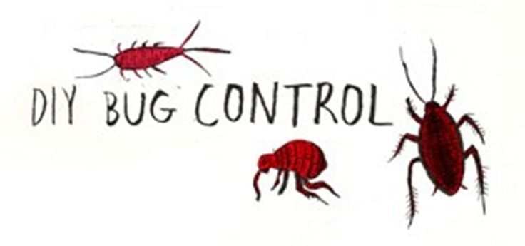 Your DIY Bug Repellent Guide to Common Household Pests YUCKY Silver Fish!