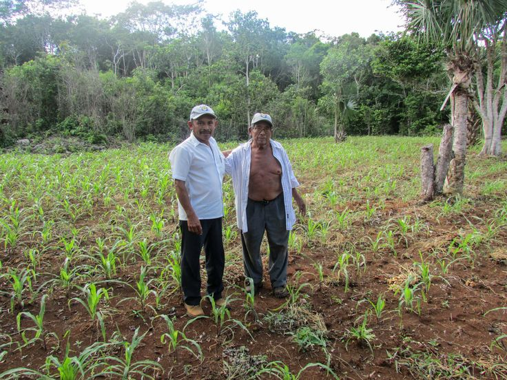 Mayans Have Farmed The Same Way For Millennia. Climate Change Means They Can't : The Salt : NPR