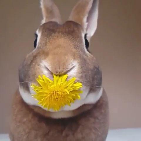 Sweet baby bunny ❤️