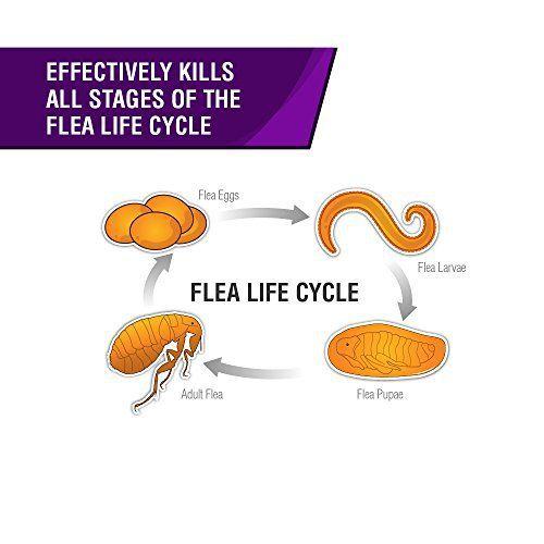 Frontline flea life cycle