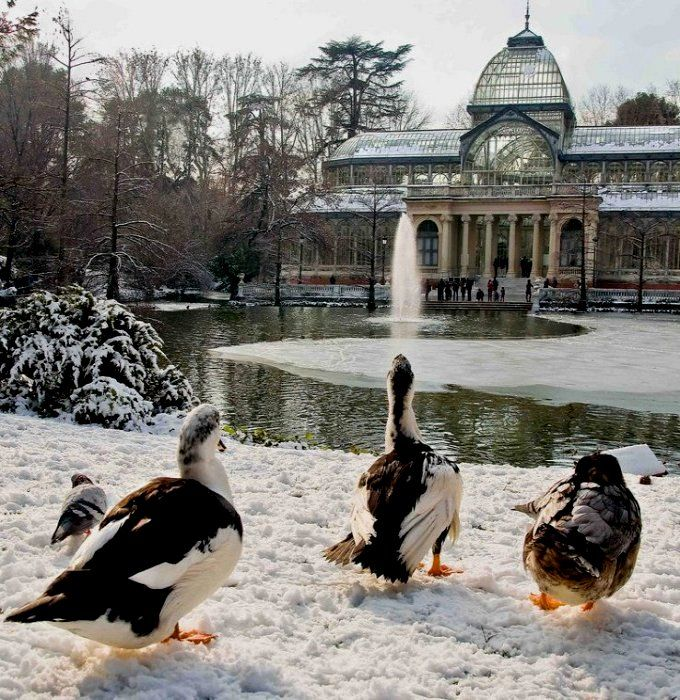 nevados y helados parques madrileños