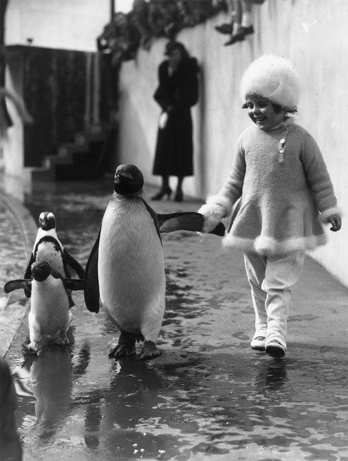 Этот 1937 фото показана маленькая девочка, держась за руки с пингвинов в лондонском зоопарке. Они выглядят как одна большая счастливая семья!