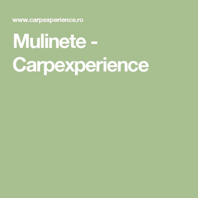 Mulinete - Carpexperience