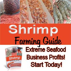Shrimp Farming Secrets