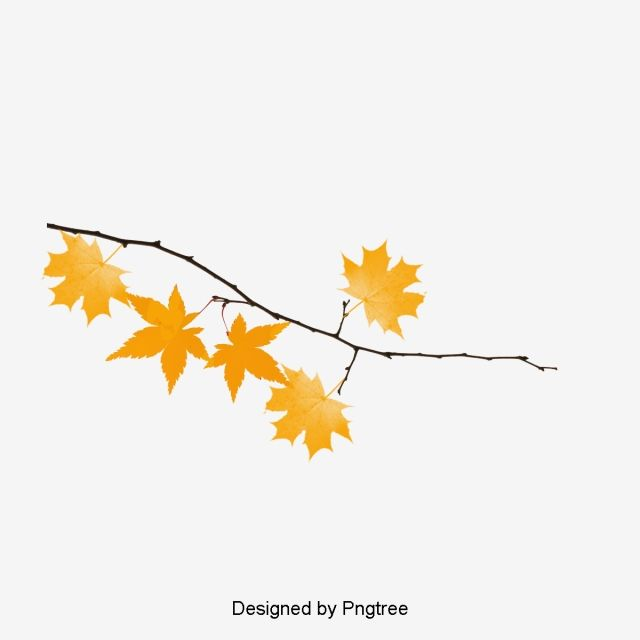 Autumn Branch Vector Png Free Download Fall Leaves Drawing Fall Leaves Tattoo Maple Leaf Art