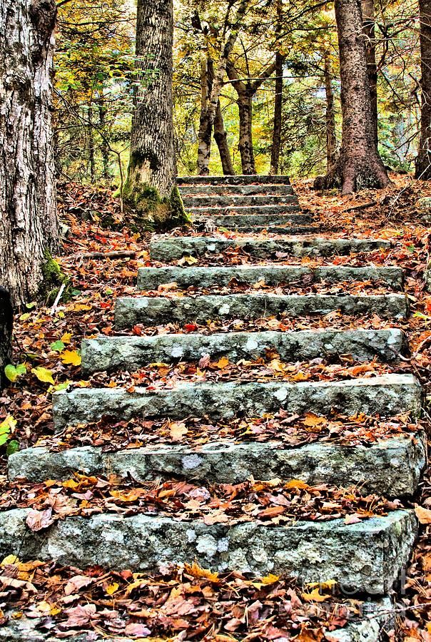 Step Into The Woods is a photograph by Debbie Stahre. Old